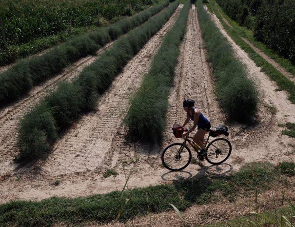 Biking in the sun from Verona to Montagnana
